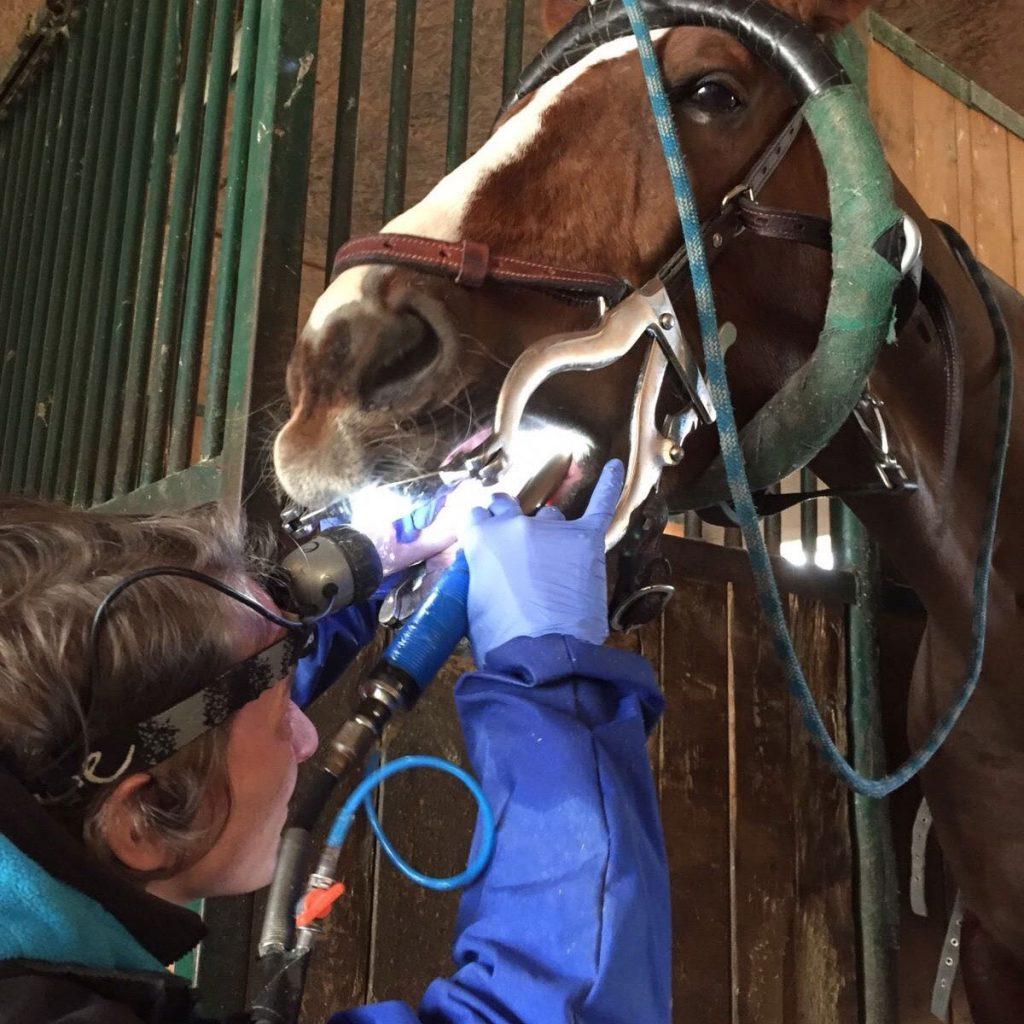 Pferdezahnarzt